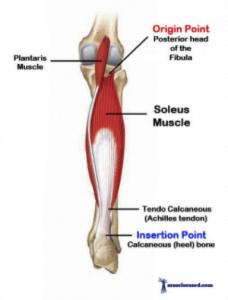 soleus-shin-splint